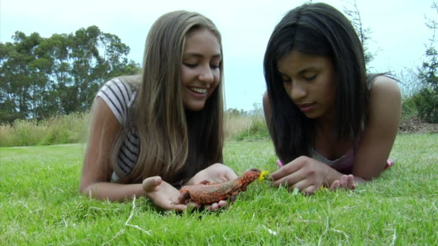 MS, Two girls playing with pet lizard lying on front on lawn, Richmond, California, USA