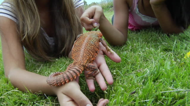 HA, ZI, CU, Two girls playing with pet lizard lying on front on lawn, Richmond, California, USA