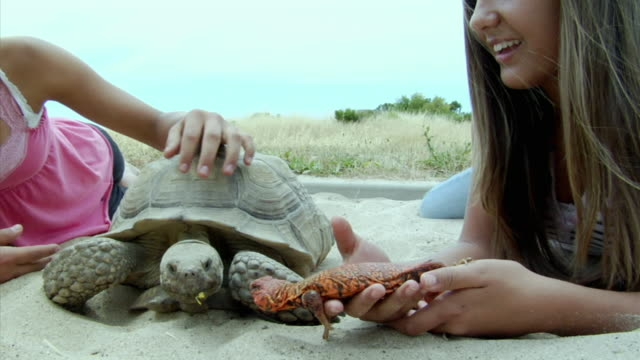 MS, CU, Two girls playing with  tortoise and pet lizard on beach, Richmond, California, USA