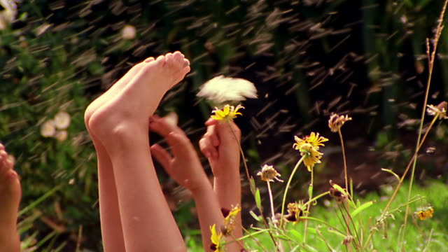 ms pan two girls playing with wildflowers in field + waving bare feet in air / gnats flying in air - reclining stock videos and b-roll footage