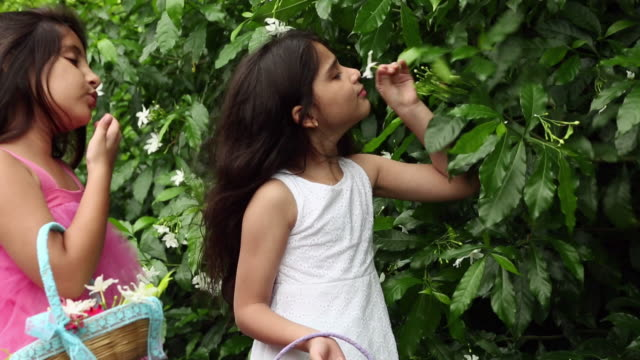 two girls plucking flowers in the garden - young girls stripping stock videos and b-roll footage