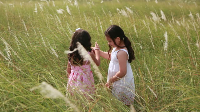 two girls plucking wild grass, haryana, india - haryana stock-videos und b-roll-filmmaterial