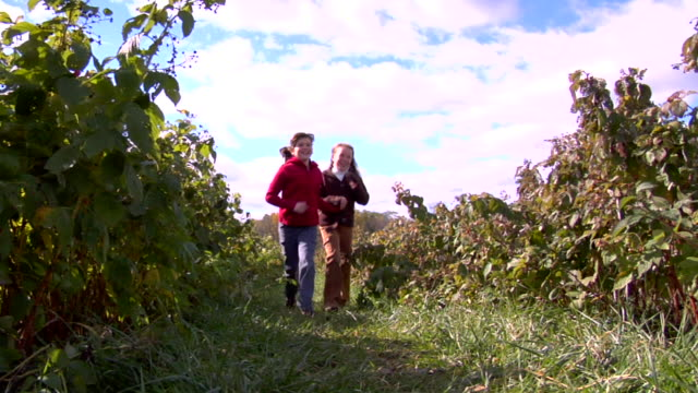 ws, two girls (10-11) running between rows of raspberry bushes, chester, new jersey, usa - brambleberry stock videos & royalty-free footage