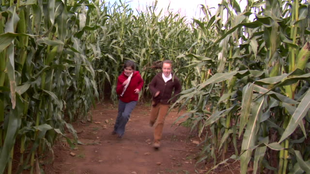 WS, Two girls (10-11) running in corn maze, Chester, New Jersey, USA