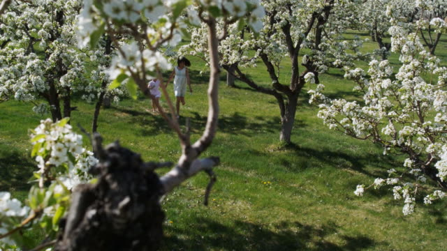 two girls running through a flowering orchard
