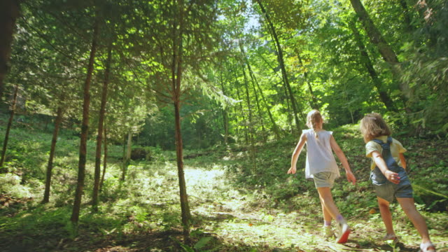two girls walking in the sunny forest - 4 5 anni video stock e b–roll