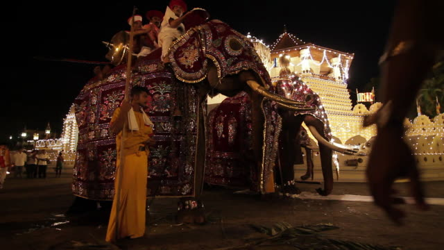 ms two grand elephants standing ready for buddhist procession 'esala perahera' in front of 'temple of tooth' audio / kandy, central province, sri lanka - sri lankan culture stock videos and b-roll footage