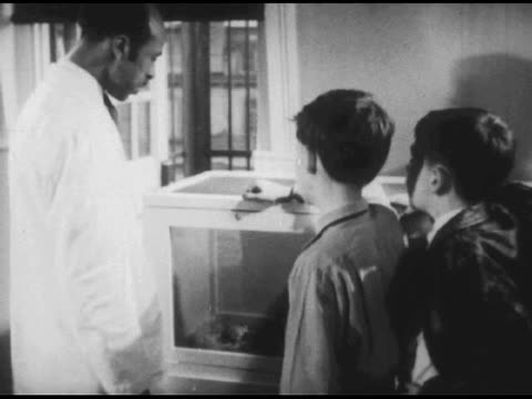 vídeos de stock, filmes e b-roll de / two hamsters in cage / young boys watch / man in white lab coat joins them and removes hamster from cage for boys to hold. two boys talk with man... - 1951