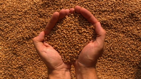 vídeos y material grabado en eventos de stock de two hands pouring out wheat with rotation - manos ahuecadas
