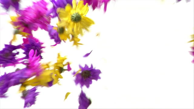 cu, two hands throwing multicolored flowers - unknown gender stock videos & royalty-free footage