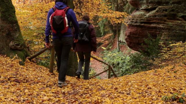 ms two hiker women walking through autumn forest  / kastel-staadt, rhineland-palatinate, germany - gemeinsam gehen stock-videos und b-roll-filmmaterial