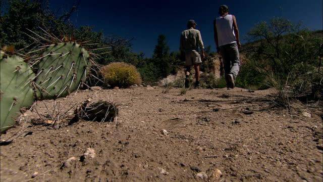 two hikers walk up a dirt path past cacti and desert shrubs. - ガラパゴスウチワサボテン点の映像素材/bロール