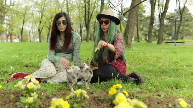 vídeos de stock, filmes e b-roll de duas mulheres jovens de hippie e um cachorro ao ar livre - cabelo verde