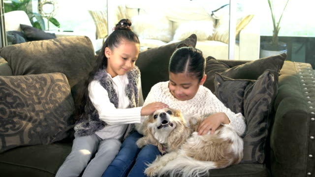 two hispanic sisters joined by dog on couch - cavalier king charles spaniel stock videos and b-roll footage