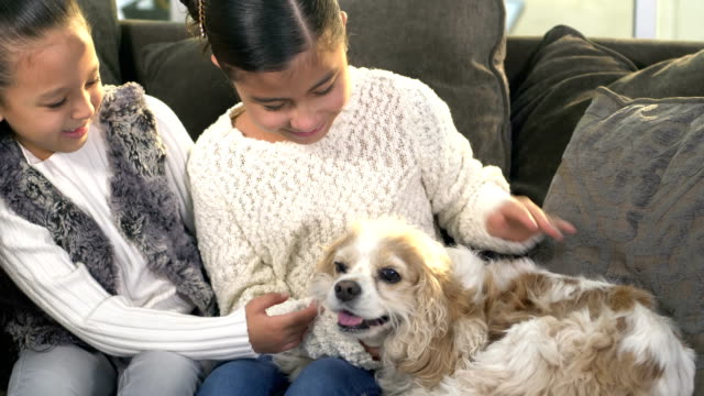 two hispanic sisters with their dog on couch - cavalier king charles spaniel stock videos and b-roll footage
