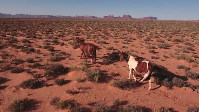 two horse tracking in desert wild horses, drone aerial 4k, monument valley, valley of the gods, desert, cowboy, desolate, mustang, range, utah, nevada, arizona, gallup, paint horse .mov - paint horse stock videos & royalty-free footage