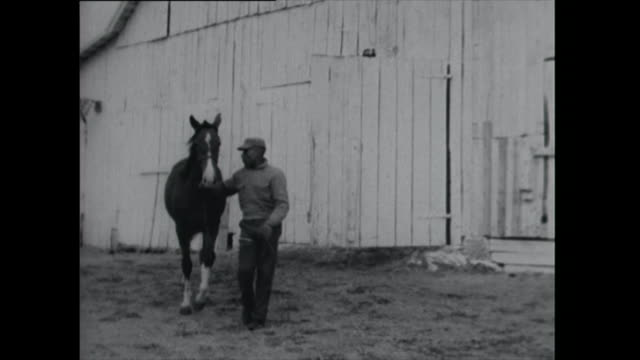 two horses being led out of barn - 1961 stock videos & royalty-free footage