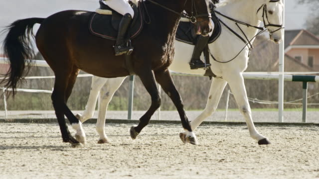 SLO MO TS Two horses cantering with their riders in sunshine