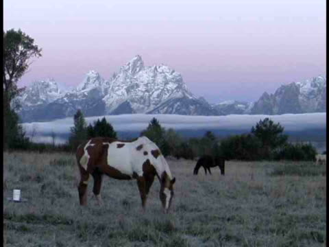 ms, two horses grazing in snowy field at teton mountains, grand teton national park, wyoming, usa - parco nazionale del grand teton video stock e b–roll