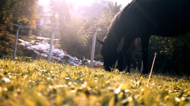 vídeos y material grabado en eventos de stock de dos caballos pastando con moscas en la granja - grupo mediano de animales