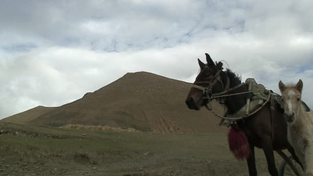 MS Two horses in landscape, Shegar, Tibet