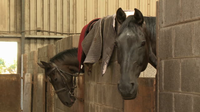 two horses in stalls - bridle stock videos & royalty-free footage