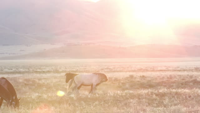 Two horses playing in the distance as the sun peaks over the mountain top