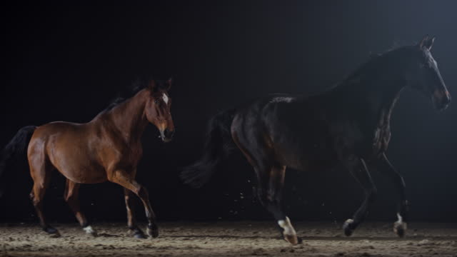vídeos de stock e filmes b-roll de slo mo two horses running in a misty riding hall at night - competição