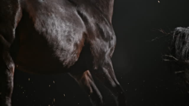 slo mo ds two horses running in arena at night - brown stock videos & royalty-free footage