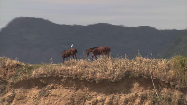 vidéos et rushes de two horses stand on a mountain ridge. - piton rocheux