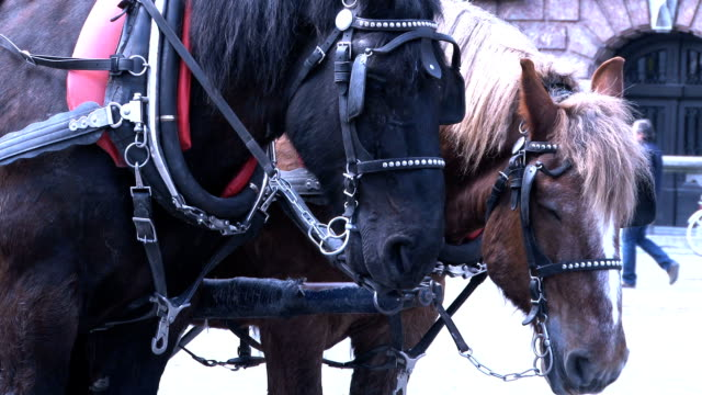 hd two horses - horsedrawn stock videos & royalty-free footage
