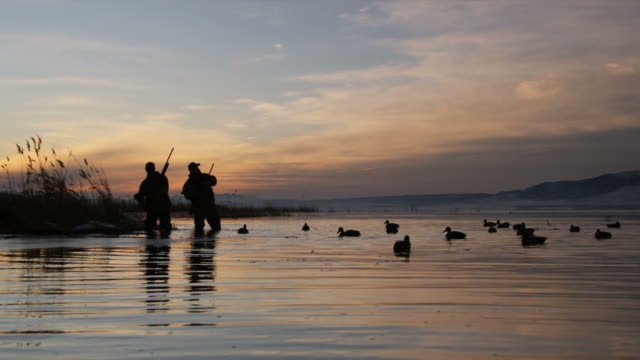 two hunters throwing duck decoys onto a pond - sequential series stock videos & royalty-free footage