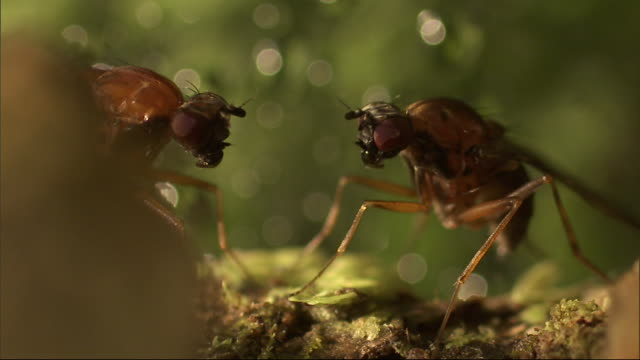 two insects stare at each other. - gliedmaßen körperteile stock-videos und b-roll-filmmaterial