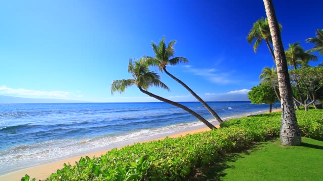 two kaanapali palm trees - hawaii islands stock videos & royalty-free footage