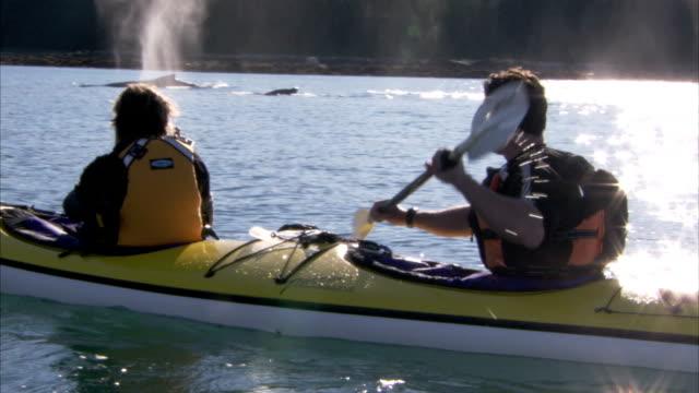 vídeos y material grabado en eventos de stock de two kayakers watch as whales breach nearby. - cetáceo