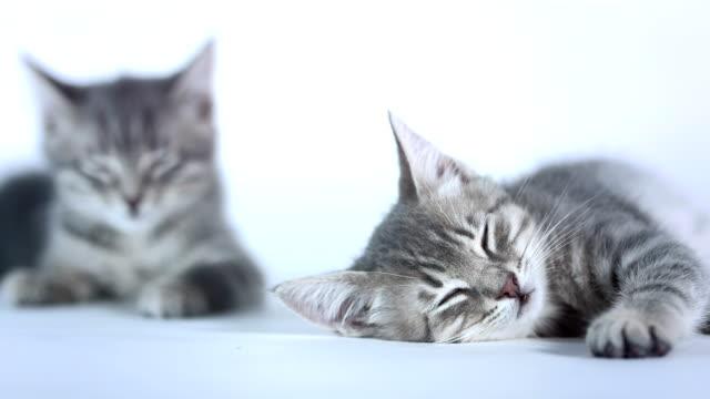 vídeos y material grabado en eventos de stock de hd: kittens dos dormitorios - gris