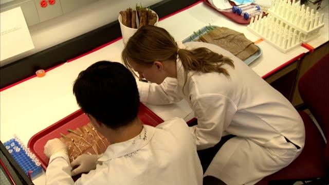 two lab technicians examine corn seedlings. - getreide stock-videos und b-roll-filmmaterial