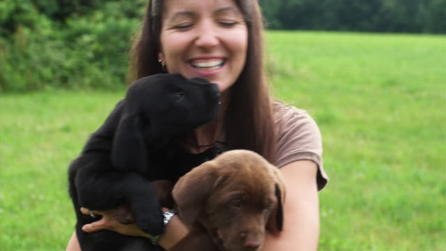 MS Two Labrador puppies licking woman on face while she holds them, Sunderland, Vermont, USA