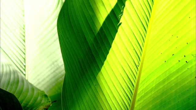 two large tropical leaves overlap in a rainforest. - multi layered effect stock videos & royalty-free footage