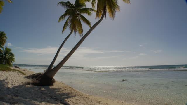 vídeos y material grabado en eventos de stock de ms, two leaning palm tress over caribbean sea, saona island, dominican republic - mar caribe