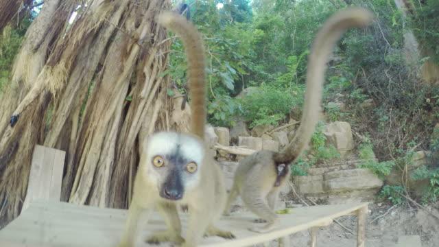 Twee Maki's controleren op een camera
