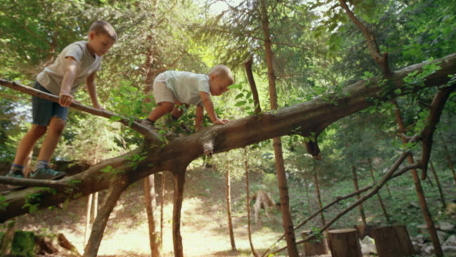 two little boys climbing a fallen tree in the woods - preschool stock videos & royalty-free footage