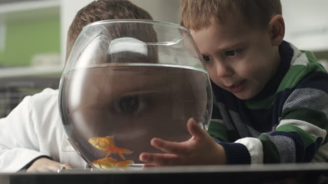 two little boys with goldfish - curiosity stock videos & royalty-free footage