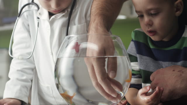 two little boys with goldfish - fishbowl stock videos and b-roll footage