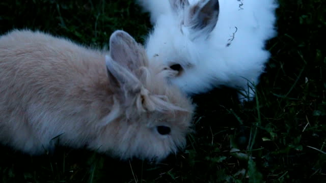 Two little rabbits outdoor