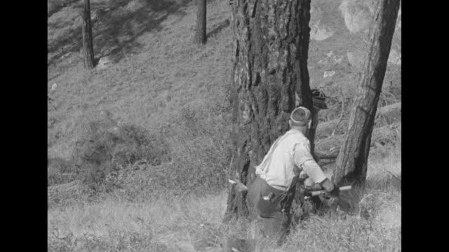 vídeos y material grabado en eventos de stock de two lumberjacks start sawing tree / same two lumberjacks use axes to chop at same tree / two shots of same two men using saw on other side of same... - oficio agrícola