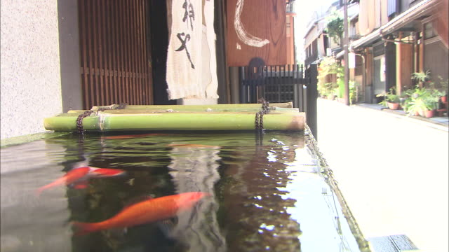 two maiko pass by goldfish swimming in a box under an eave. - eaves stock videos and b-roll footage