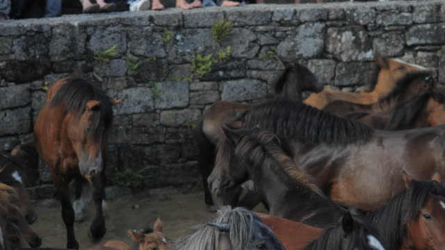 l/s two male horses fighting - galicia stock videos & royalty-free footage