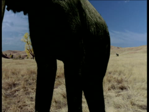 two mammoths walk past herd on ice age prairie, north america - extinct stock videos & royalty-free footage