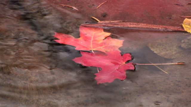 cu two maple leaves floating in oak creek/ canyon de chelly national monument, arizona - canyon de chelly stock videos & royalty-free footage
